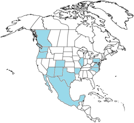 north-america-coloring-page